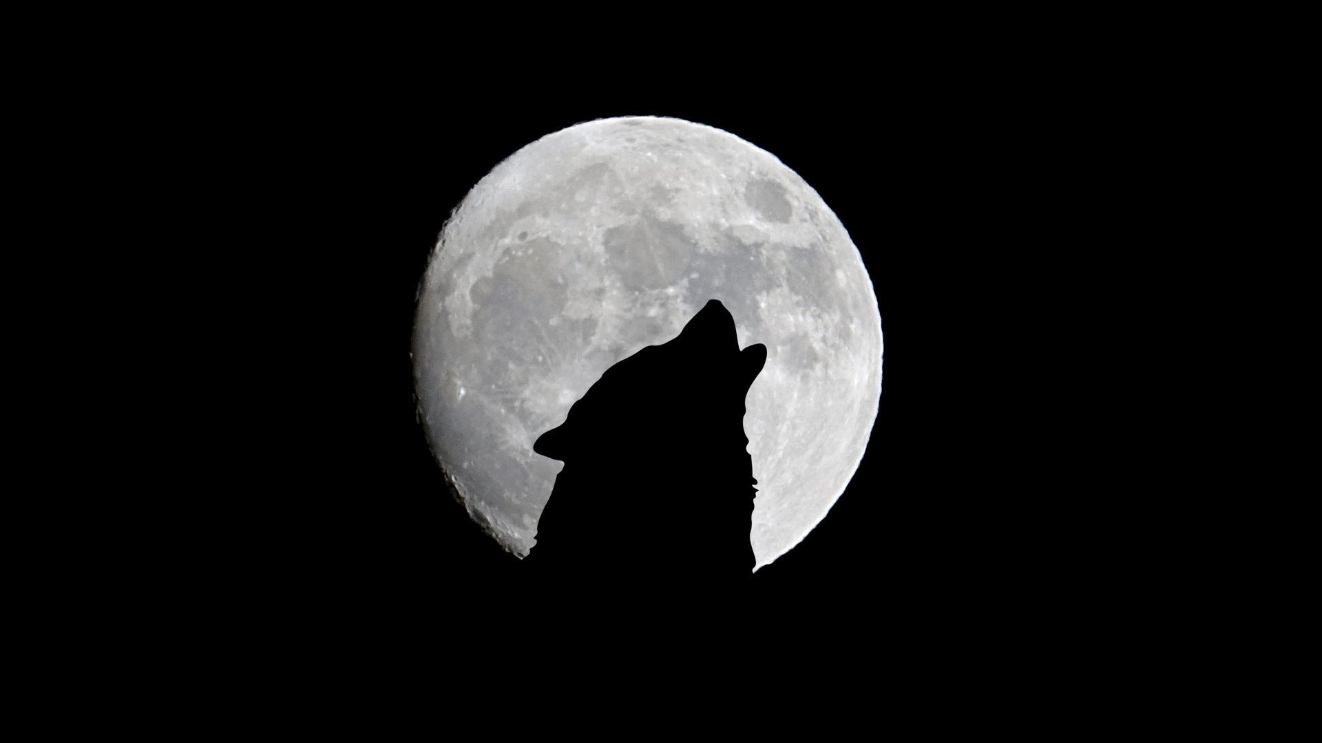 lone wolf moon